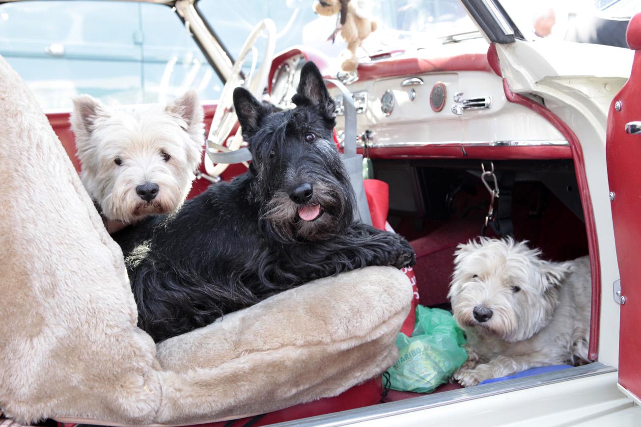 Hundemotorsport
